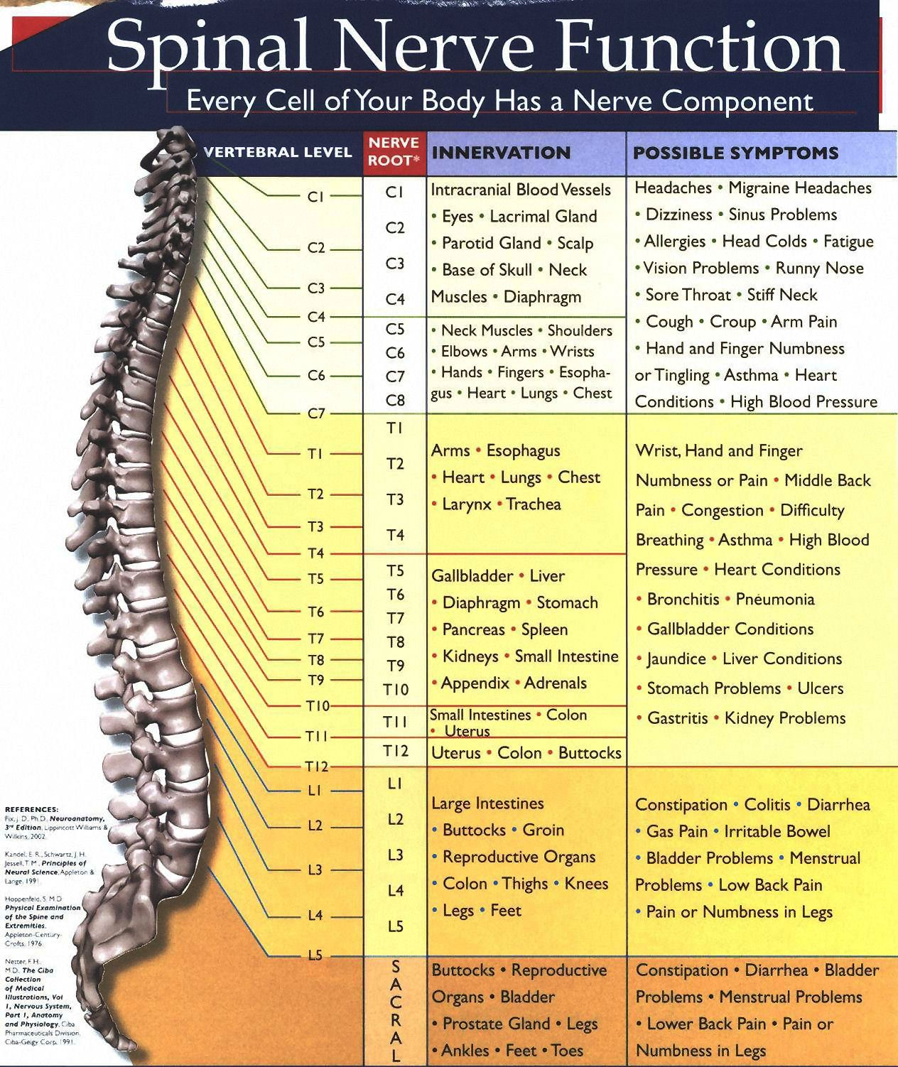 spinalnervechart
